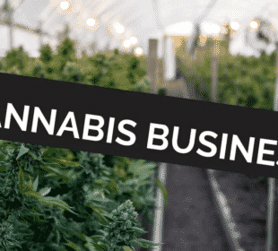 Cannabis Businesses